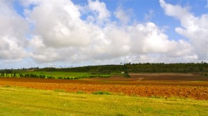 Barbados Red Lands Scenic Shot