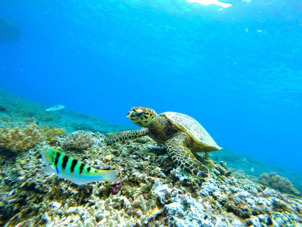 underwater-663407_1280