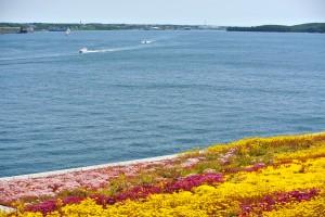 Seaport Roof top Environmental Planting