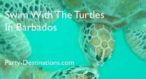 Love & Life of the Green Sea Turtle